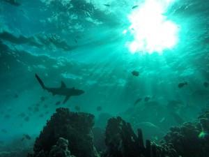 lord-howe-island-sea-life05