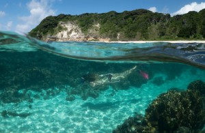 lord-howe-snorkeling03
